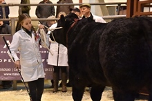 Louth Annual Christmas Stock Show
