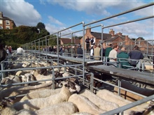 2nd Sheep Sale 2017