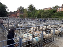 2nd Special Sheep Sale 2018